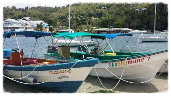 Marigot Bay, St. Lucia: Shashamane Water Taxi At Your Service
