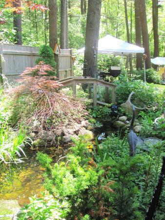 Duxbury Tall Pines: Peaceful brook in back