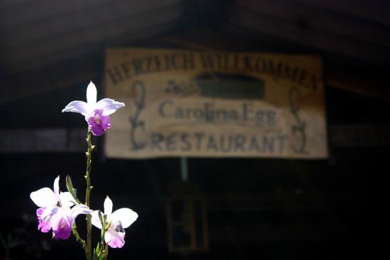 Carolina Egg Gasthaus : Lindo lugar lleno de naturaleza y vida