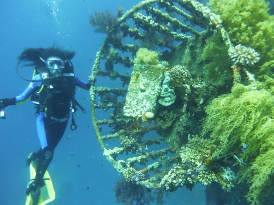 Diving picture of aqaba international dive center aqaba for Aqaba dive