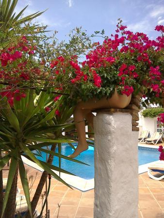 Finca Los Etera: Poolside