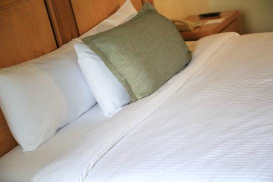 Quality Inn & Suites Saltillo Eurotel: King Bed