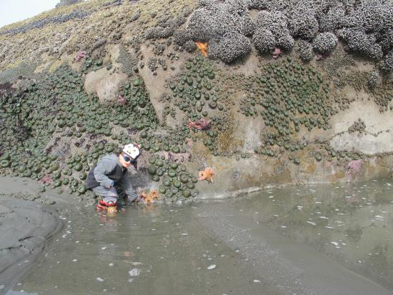 Kalaloch Lodge In Olympic National Park Tidepools On Beach 4 Just A