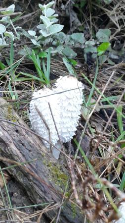 Van Stadens Nature Reserve: fabulous fungi