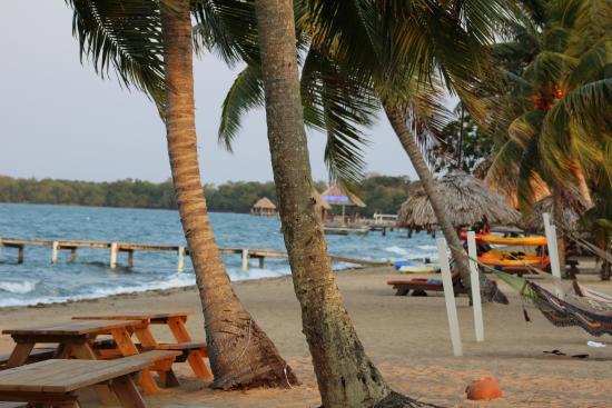 grounds picture of jaguar reef lodge spa hopkins. Black Bedroom Furniture Sets. Home Design Ideas