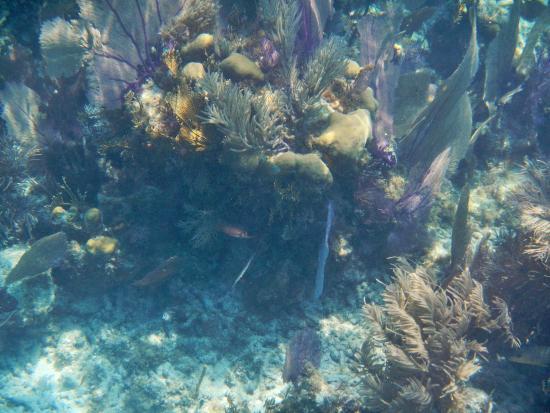barrier reef snorkel picture of jaguar reef lodge spa. Black Bedroom Furniture Sets. Home Design Ideas