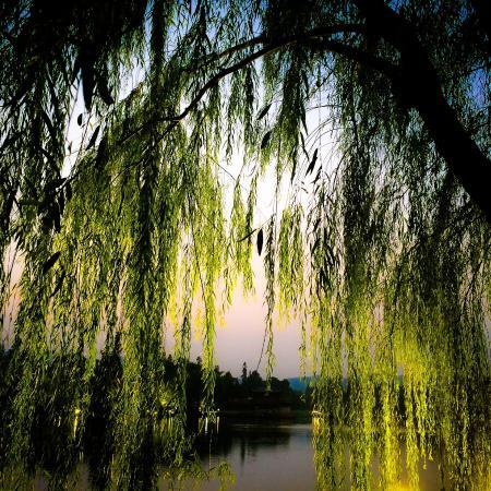 West Lake (Xi Hu): WONDERFUL_WEST_LAKE_Hangzhou_Photo G.Arcese ©
