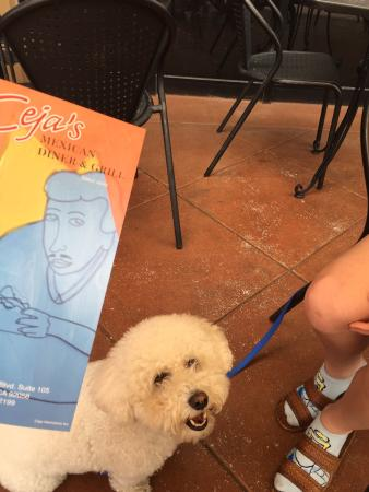 Ceja's Mexican Diner & Grill: We came to town with our dog and enjoyed our meal in the patio. Everything was so yummy.