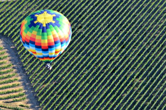 Napa Valley Aloft Balloon Rides: grapeview