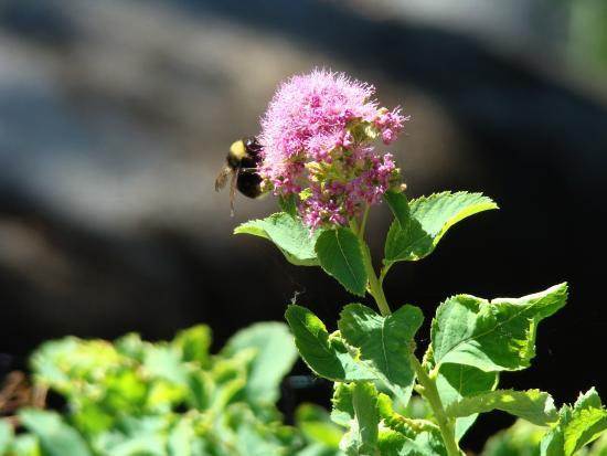 Ponderosa State Park: Lots of wild flowers.