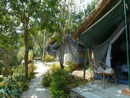 Himalayan Yoga Academy and Retreat: The cottage tents