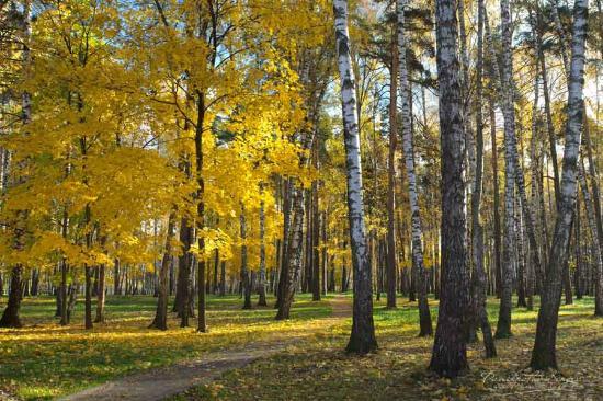 Balashikha Park