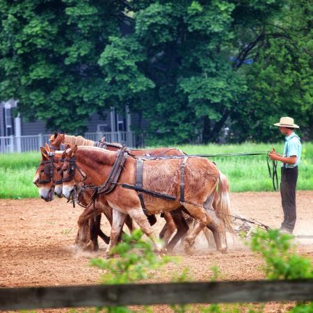 Candlelight Inn Bed & Breakfast: Amish Farmer Next Door to the Inn