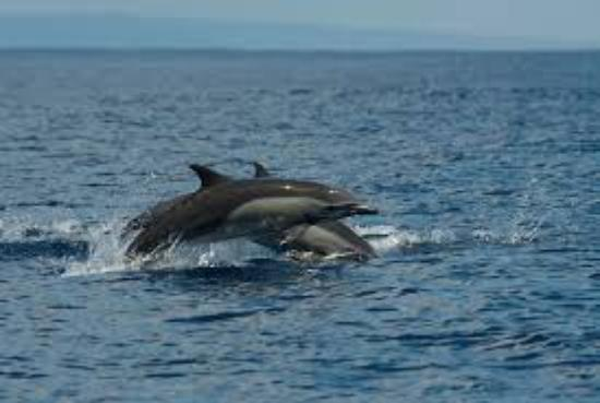 Drake Bay, Costa Rica: Dolphins seeing around the bay