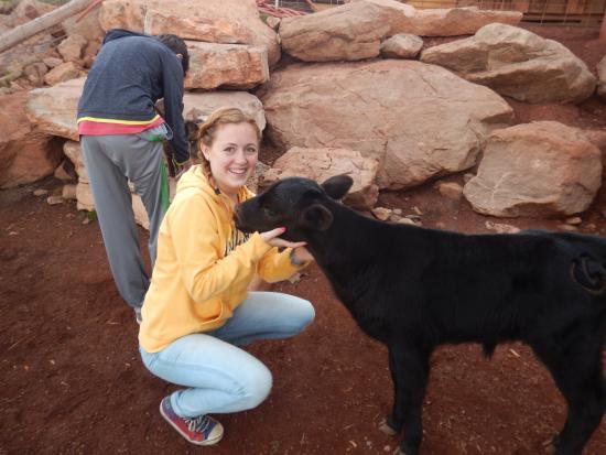 Mc Coy, Kolorado: Orphaned calf.