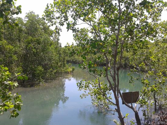 Calapan, Filipinas: View from watch tower at the end of mangrove boardwalk