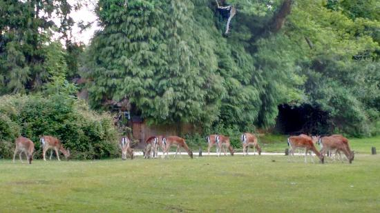 Ocknell and Longbeech Campsites: Beautiful Ocknell and Longbeech Campsite