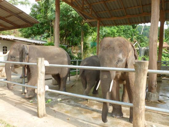 Kai Bae Beach: elephants in Kai Bae village