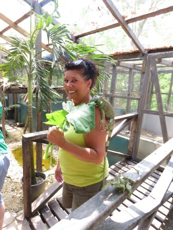 Green Iguana Conservation Project : Feeding time