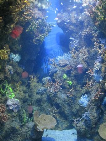 Display - Picture of Malta National Aquarium, Qawra - TripAdvisor