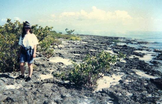 Indian Key State Historic Site: walking along the rocky shore
