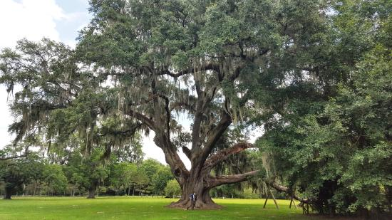 Gainesville, Floride : The back side of the tree