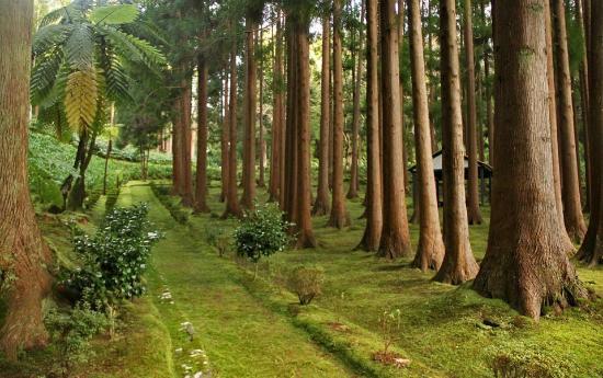 Reserva Florestal de Recreio de Fontinhas