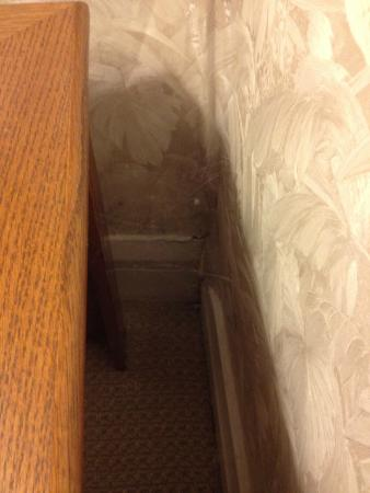Trinity House Inn: cobwebs