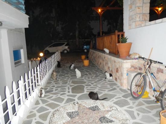 Hotel Apartments Aphrodite of Milos: Gatitos