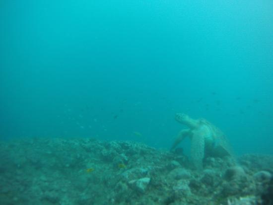 Sakalav' Diving: tortue
