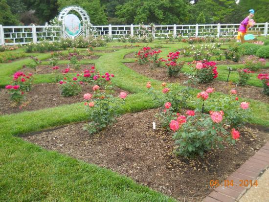 Rose Garden Picture Of Missouri Botanical Garden Saint Louis Tripadvisor