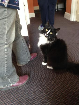 Grange Lodge Hotel: The Hotel's Cat
