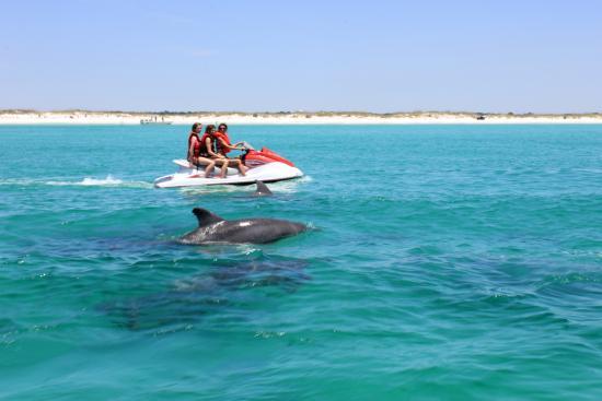 Jet Ski Dolphin Adventure Picture Of