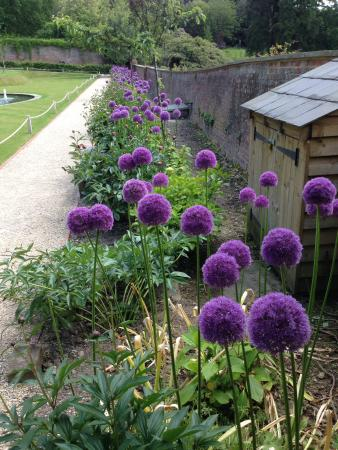 Riverhill Himalayan Gardens: Alliums In Walled Garden