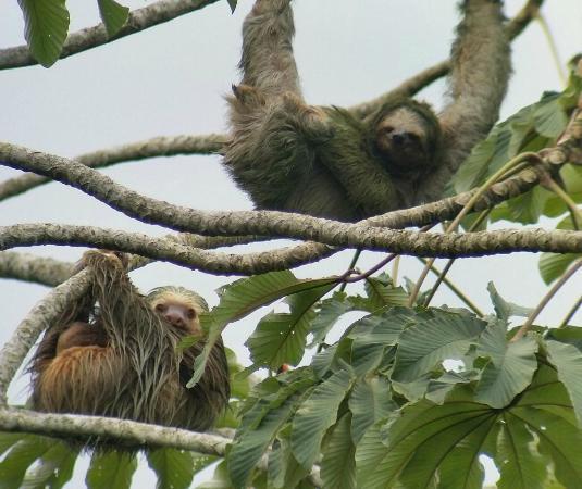 Rain Forest Explorers