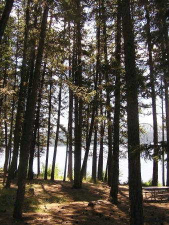 Seeley Lake, MT: forest shade