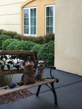 La Quinta Inn & Suites Mobile - Tillman's Corner: Charlie and Ranger approve a stay at this La Quinta Inn