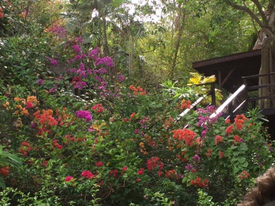 Villa Pomme d'Amour: Flowers