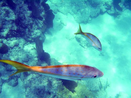 Key West Sailing Adventure: Snorkeling