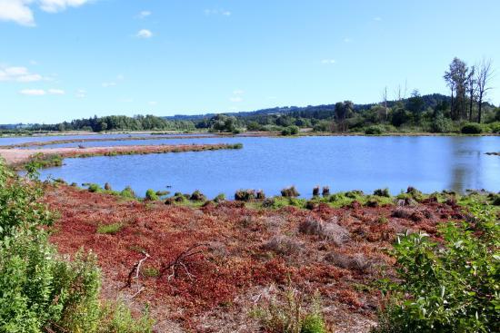Fernhill Wetlands Park : Simply beautiful! -fernhill wetlands