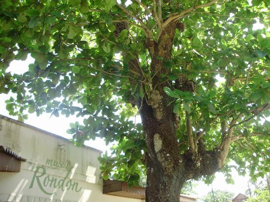 Rondon Museum