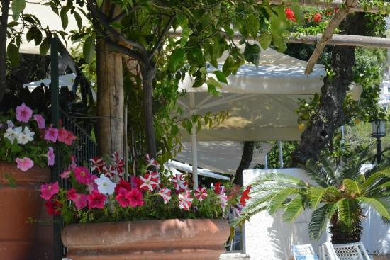Hotel Aurora: Breakfast/drinks terrace