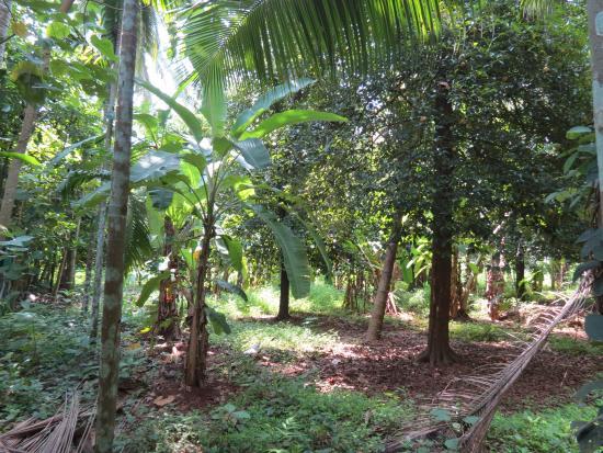 Rayirath Heritage Ayur Resort: Inside Garden