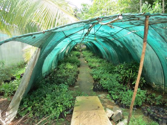 Rayirath Heritage Ayur Resort: Garden