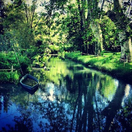 Champs de coquelicots saint r my de provence photo de for Entretien jardin st remy de provence