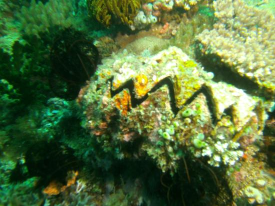 Action Divers: Giant Clam
