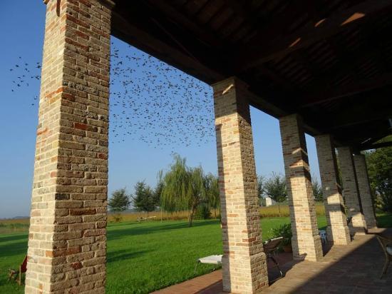 Agriturismo Ca' Lealta: Uno scatto al momento giusto di uno storno in migrazione