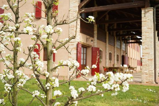 Agriturismo Ca' Lealta: I peri sono in fiori e Ca' Lealtà si tinge di bianco