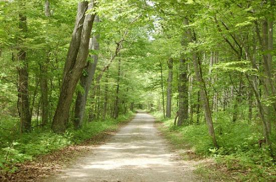 harrison trail picture of rondeau provincial park. Black Bedroom Furniture Sets. Home Design Ideas