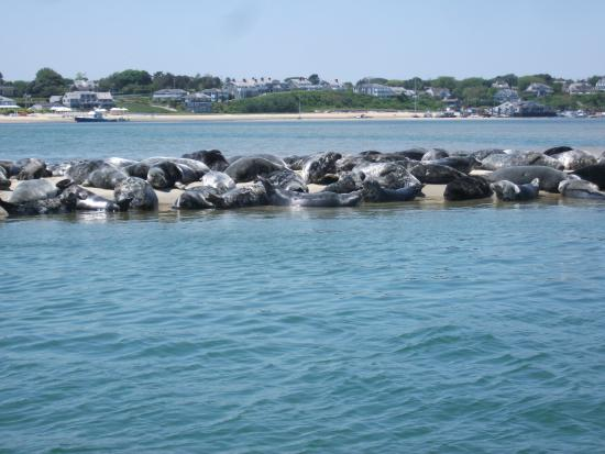 Blue Claw Boat Tours: 300 Harbor Seals